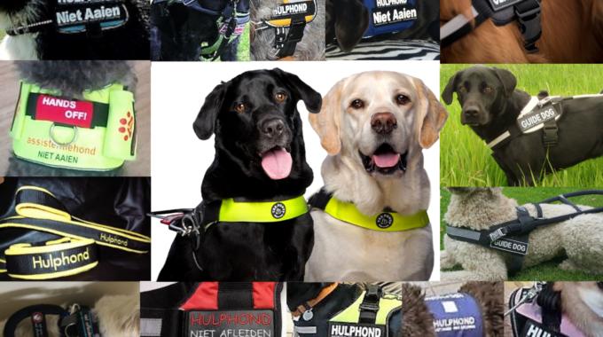Een dringende oproep vanuit MKB/Horeca/Openbare instellingen: Maak assistentiehonden herkenbaar!!
