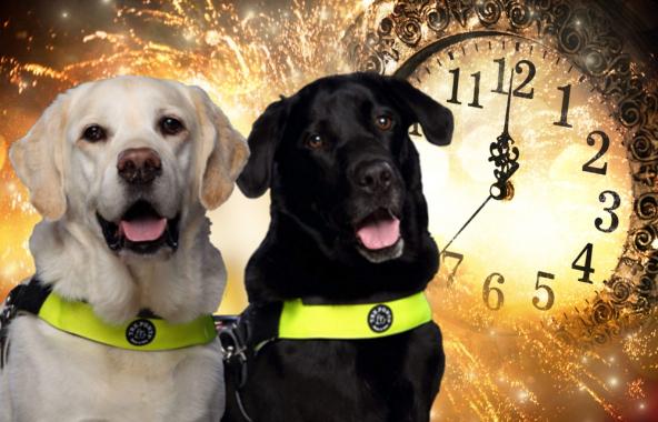 Hond en vuurwerk: Wees een wijze baas!