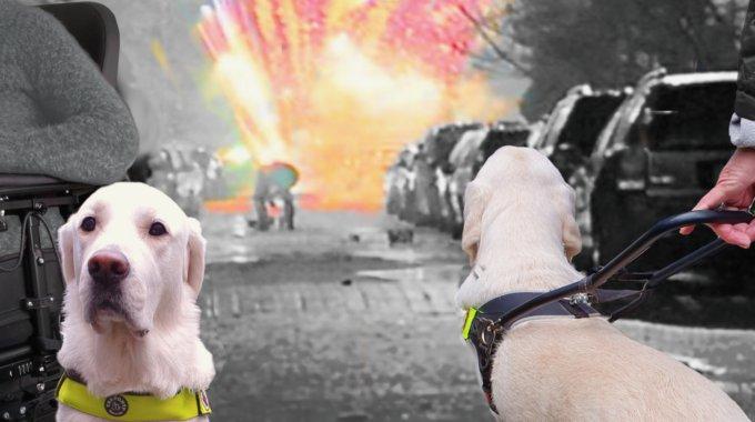 Heeft jouw assistentiehond letsel of een trauma opgelopen door vuurwerk (en is daardoor tijdelijk of helemaal niet meer inzetbaar)?